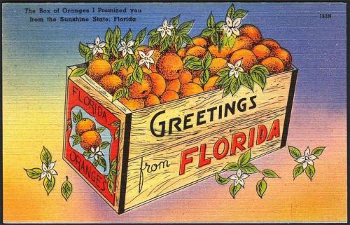 Box of Oranges Postcard