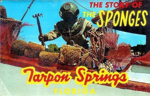 Tarpon Springs Postcard
